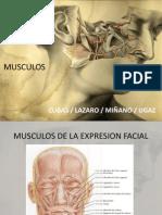 Musculos Para Prótesis Completa