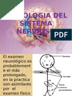 Sistema Nervioso Semio