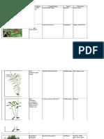Plant list with botanical origin
