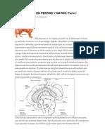 VETERINARIA Pancreatitis en Perros y Gatos i