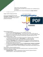 sinteza proteinelor