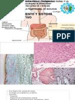 Sistema Tegumentario & Digestivo