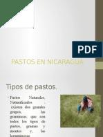 Pastos en Nicaragua