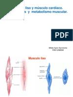 3 Neuro M.liso y Cardiaco,Mecanoreceptores