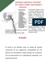 9 y 10-Neuro-Func.Cerebrales Sup. y Aprend. y Memoria