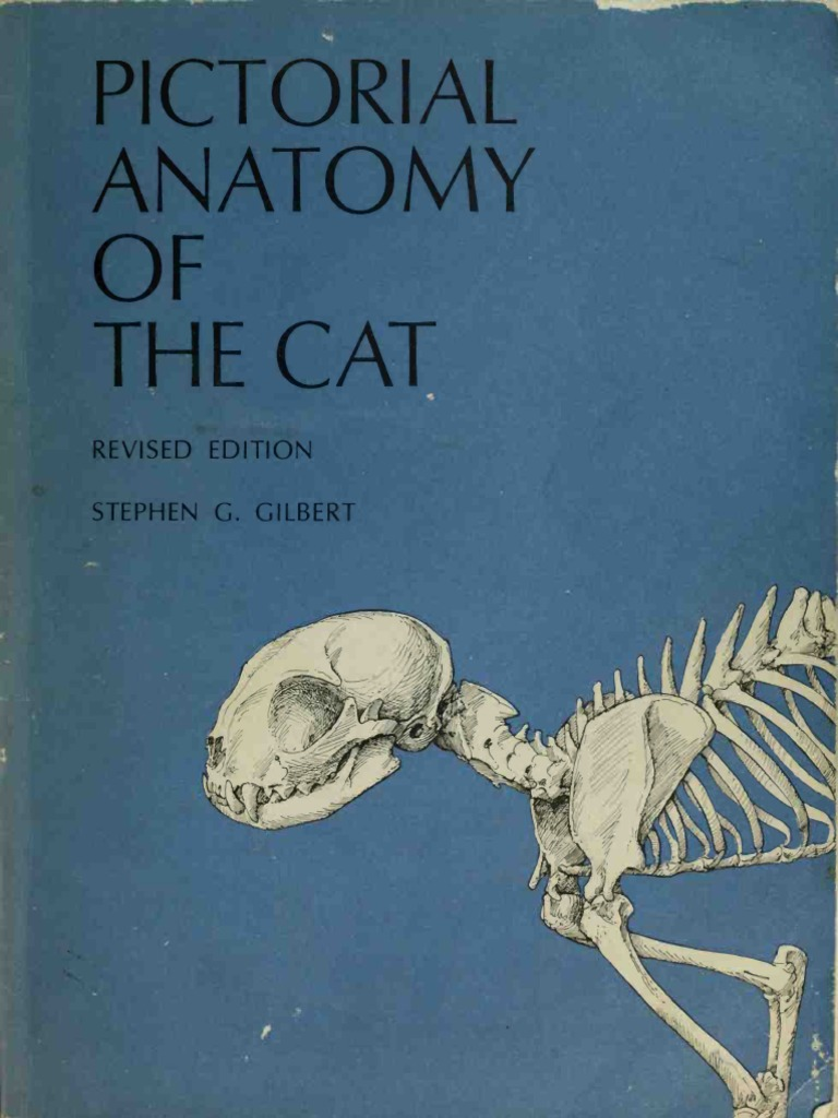 Pictorial Anatomy of the Cat.pdf | Vertebra | Skull