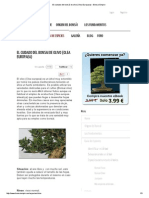 El Cuidado Del Bonsái de Olivo (Olea Europaea) - Bonsai Empire