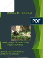 Animals in the Street