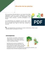 Clasificación de Las Plantas (Angiospermas y Gimnospermas)