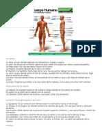 El Cuerpo Humano Tarea 1