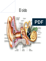 3. Anatomía y Fisiología Auditiva
