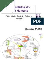os-5-sentidos-do-corpo-humano2.ppt