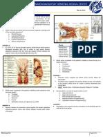 BRT Anatomy - Neuroanatomy