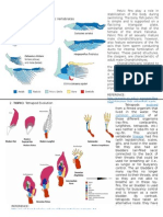 COMPARATIVE ANATOMY- Pelvic Fins & Evolution.docx