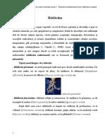 Botanica - pentru studentii anului I - Paralelă morfo-anatomică între rădăcină şi tulpină