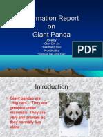 Information Report on Pandas