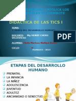 Fases del desarrollo humano