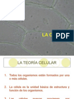 Reproduccion asexual directa amitosis disease