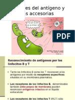 Receptores del antígeno y moléculas accesorias
