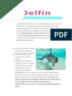 Delfín información