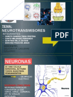 Neurotransmisores y Neuropeptidos Ppt