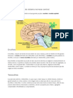 Divisões Principais Do Sistema Nervoso Central