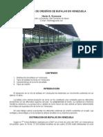 Bubalinocultura - Alternativa de Ordeno de Bufalas