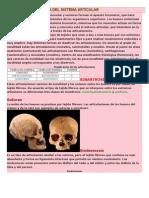 Anatomia y Fisiologia Del Sistema Articular