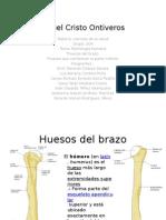 Morfologia humana.pptx