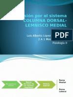 Transmisión Por El Sistema Columna Dorsal-lemnisco Medial