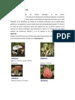 Lista de Especies Reino Fungi