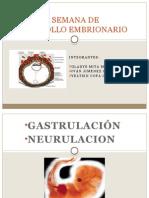 Tercera Semana de Desarrollo Embrionario Final
