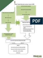 Pathophysiology of Acute Tubular Necrosis