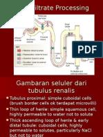 Tubular Reabsorption and Secretion