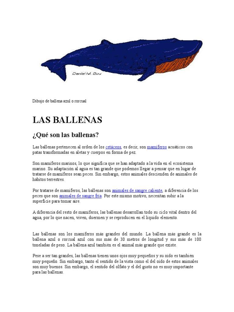 Fantástico Colorear Ballena Azul Imágenes - Dibujos Para Colorear En ...