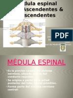 medulaespinal