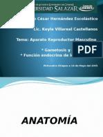 Anatomía.... Lic. Keyla 123.pptx