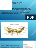 HUESOS-ESFENOIDEShttp://es.scribd.com/doc/105159071/Hueso-Esfenoides#scribd