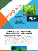 Eukarya Linaje de Las Algas