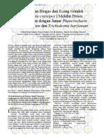 ITS Undergraduate 23059 Paper 432022