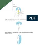 PROBLEMAS DE COLUMNA.docx