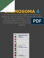 CROMOSOMA 4
