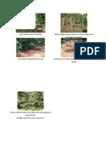 Gambar Sistem Pertanian Konservasi
