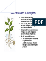 Water and Xylem Transport