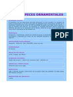 Ciclido Enano Cacatua (Apistograma Cacatuoides)