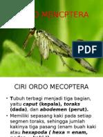 Ordo Mencptera entomologi