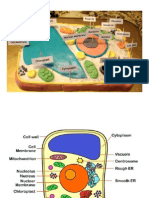 Science Plant Cell