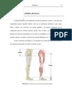 Anatomia de La Pierna Humana