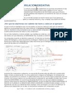 Bioquímica - Fosforilacion Oxidativa