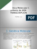 Genetica Estacion 3